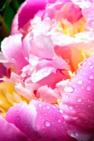 After the Rain by Bruce Deacon on PageMaster Publishing