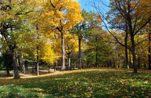 Autumn Carpet by Bruce Deacon on PageMaster Publishing