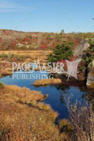 Eastcoast Carpet by Bruce Deacon on PageMaster Publishing