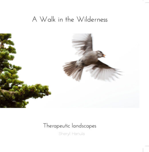 front cover of a walk in the wilderness by sheryl hanula