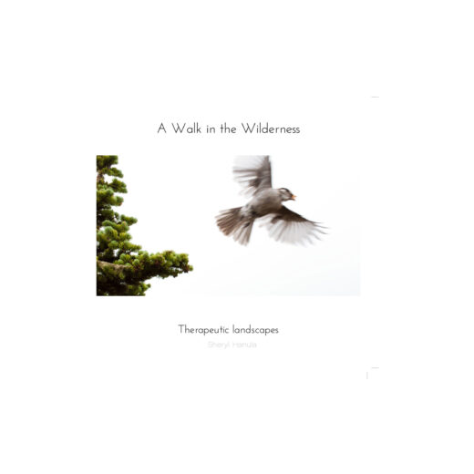 front full web cover of a walk in the wilderness by sheryl hanula