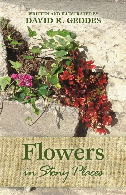 Flowers in Stony Places